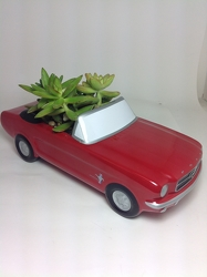 Young's Own Ford Mustand Succulent Planter   from Young Floral Co in Charleston, WV