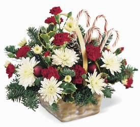 Candy Cane Lane Arrangement from Young Floral Co in Charleston, WV