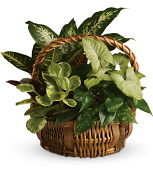 Emerald Garden Basket from Young Floral Co in Charleston, WV