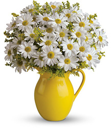 Teleflora's Sunny Day Pitcher of Daisies from Young Floral Co in Charleston, WV