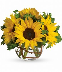Sunny Sunflowers from Young Floral Co in Charleston, WV