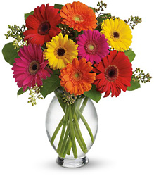 Gerbera Brights from Young Floral Co in Charleston, WV