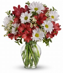 Dancing in Daisies from Young Floral Co in Charleston, WV