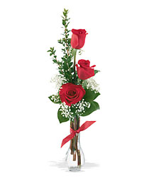 3 Red Roses from Young Floral Co in Charleston, WV