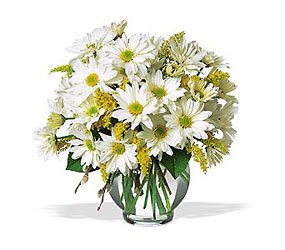 Daisy Cheer from Young Floral Co in Charleston, WV
